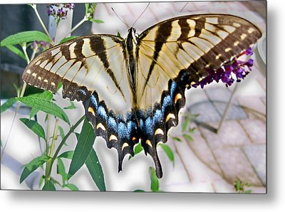 Monarch Majesty Metal Print