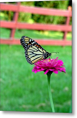 Metal Print featuring the photograph Monarch  by Natasha Denger