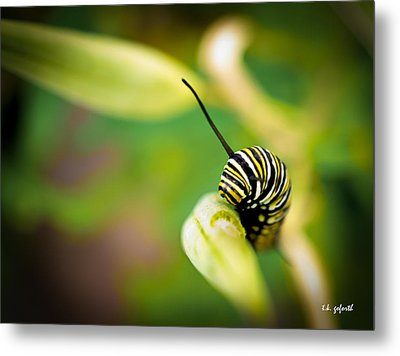 Monarch Offspring Metal Print by TK Goforth