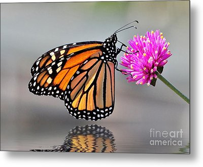 Metal Print featuring the photograph Monarch On A Pink Flower by Kathy Baccari