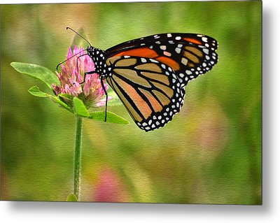 Monarch On Clover Metal Print