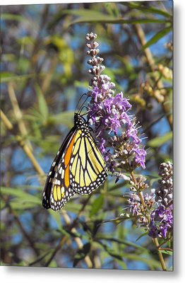 Metal Print featuring the photograph Monarch On Vitex by Jayne Wilson