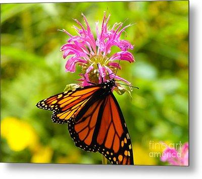 Monarch Under Flower Metal Print