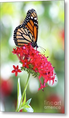 Monarch V Metal Print by Pamela Gail Torres