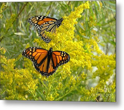 Monarchs On Goldenrod Metal Print by Susan  Dimitrakopoulos