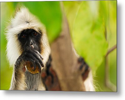 Monkey See Metal Print by Stefan Carpenter