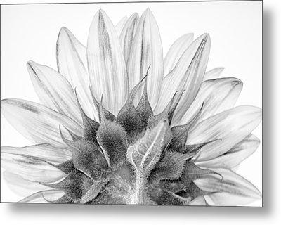 Monochrome Sunflower Metal Print by Stelios Kleanthous
