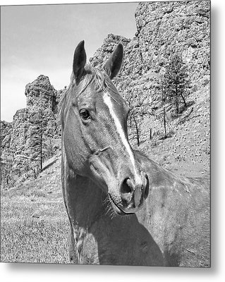 Montana Horse Portrait In Black And White Metal Print by Jennie Marie Schell
