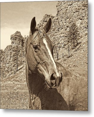 Montana Horse Portrait In Sepia Metal Print by Jennie Marie Schell