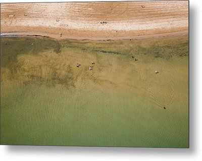 Montrose Beach Dog Park Metal Print
