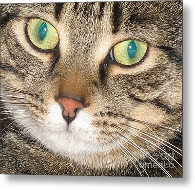 Monty The Cat Metal Print by Jolanta Anna Karolska