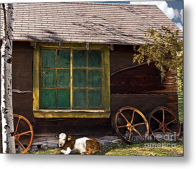 Metal Print featuring the photograph Moo Twenty-two by Sandi Mikuse