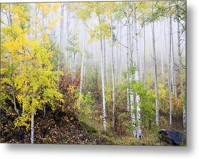 Mood Over Matter Metal Print by Morris  McClung