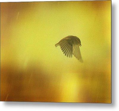 Little Bird On A Moody Flight Metal Print