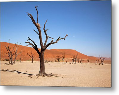 Moon And Tree With Nest, Dead Vlei Metal Print by Jaynes Gallery