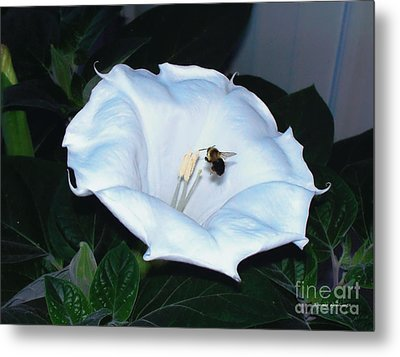 Metal Print featuring the photograph Moon Flower by Thomas Woolworth