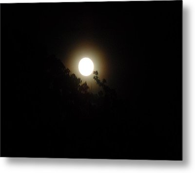 Moon Glow Metal Print by Philomena Zito