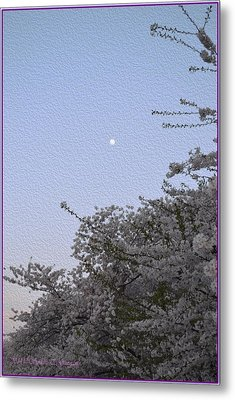 Moon In Cherry Blossom Metal Print by Sonali Gangane