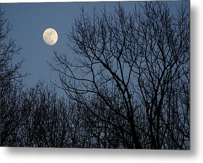 Moon Over Trees Metal Print