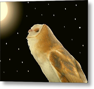 Moon Owl Metal Print by Peg Urban