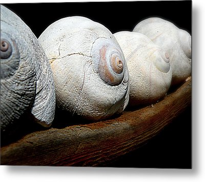Metal Print featuring the photograph Moon Shells by Micki Findlay