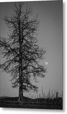 Metal Print featuring the photograph Moon Tree by Jan Davies