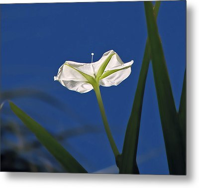 Moonflower Metal Print by Peg Urban