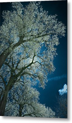 Moonlight Metal Print