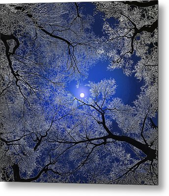 Moonlight Trees Metal Print by Igor Zenin