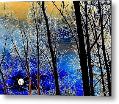 Moonlit Frosty Limbs Metal Print by Will Borden