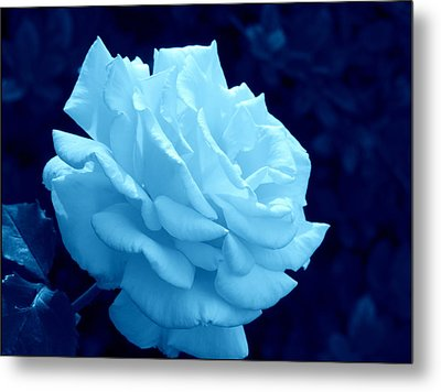 Moonlit Rose Metal Print