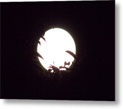 Moonshine 12 The Lonely Beetle Metal Print