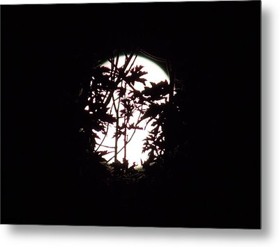 Moonshine 9 Beyond The Forest Metal Print