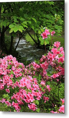 Moonshine Creek Rhododendron Bloom - North Carolina Metal Print by Mountains to the Sea Photo