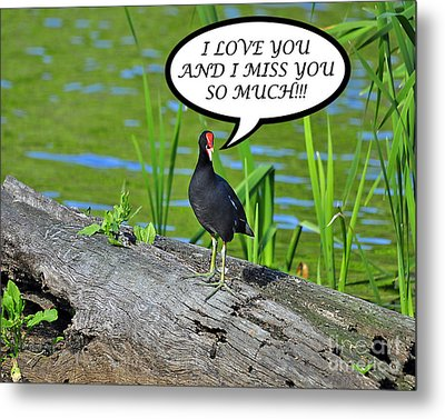 Moorhen Miss You Card Metal Print by Al Powell Photography USA