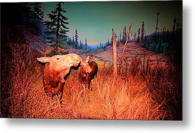 Moose ..algonkian Metal Print by Larry Trupp