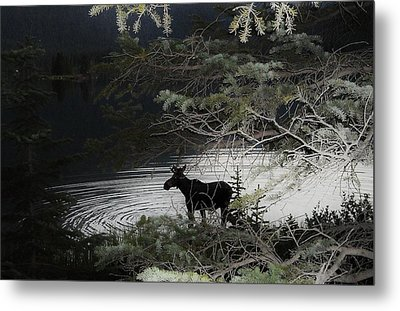 Moose Has Happy Hour Metal Print by Cathy Long