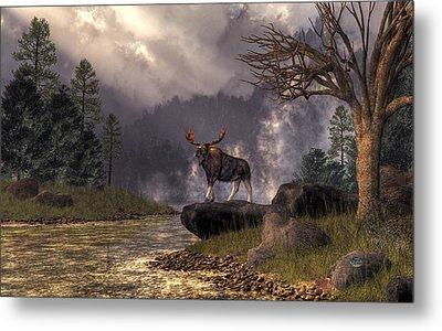 Moose In The Adirondacks Metal Print