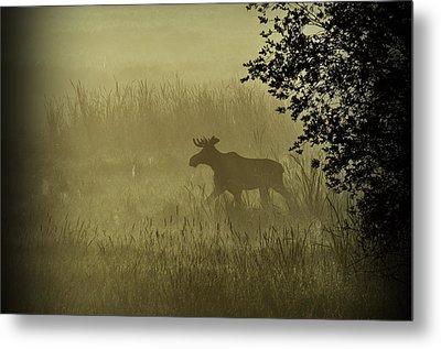 Moose In The Mist Metal Print by Annie Pflueger