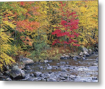 Moose River Autumn Metal Print by Alan L Graham