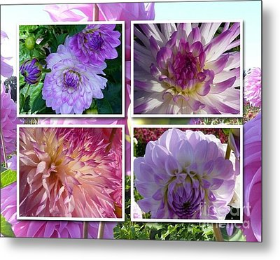 More Dahlias Metal Print by Susan Garren