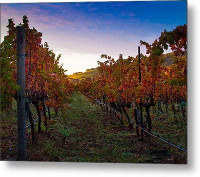 Morning At The Vineyard Metal Print by Bill Gallagher