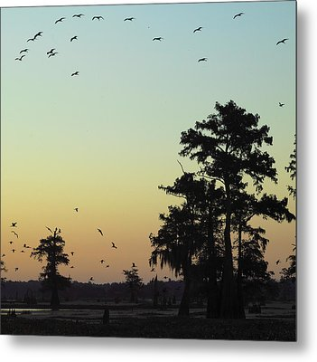 Metal Print featuring the photograph Morning Birds by Silke Brubaker