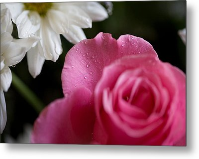 Morning Dew Metal Print by John Holloway