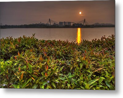 Morning Dew Metal Print by Mario Legaspi
