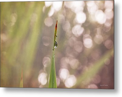 Morning Dew On A Grass Metal Print by Angela A Stanton