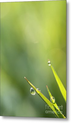 Morning Dew On Grass Metal Print by LHJB Photography