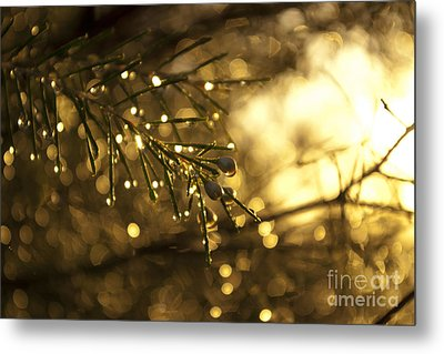 Metal Print featuring the digital art Morning Dew by Serene Maisey