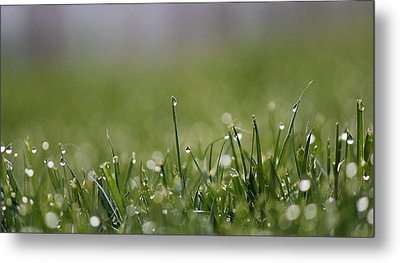 Morning Dew Metal Print by Silke Brubaker
