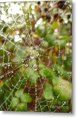 Morning Dew Metal Print by Vicki Spindler